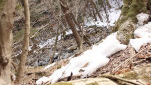Tochigi Melting Snow 300x169 - Suga's Carbon Zero Goal Met with Praise and Skepticism